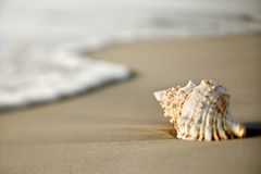 Conch shell on sand. Conch shell on beach  with waves Stock Photo