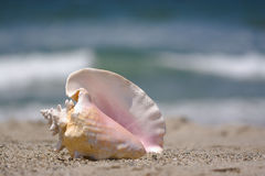 Conch shell on sand Stock Image