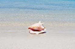 Conch shell on sand beach with sea. Waves stock photography