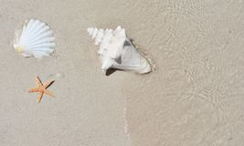 Conch shell on sand beach with sea Stock Photos