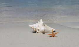Conch shell on sand beach with sea Royalty Free Stock Photos