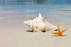 Conch shell on sand beach with sea background copy space, stock, photo, photograph, image, picture. Conch shell on sand beach with sea waves background copy stock photo