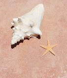 Conch shell on sand beach with sea Royalty Free Stock Images