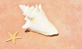 Conch shell on sand beach with sea Stock Images