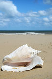 Conch Shell. On sand with ocean background Royalty Free Stock Image