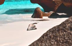 Conch on beach. A conch shell on the sand on a tropical beach Stock Photos