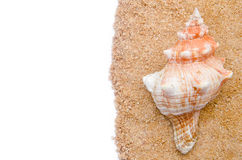 Conch shell. On sand and white  background Royalty Free Stock Image