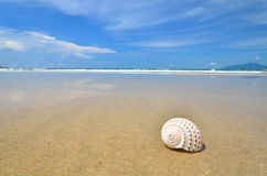 Conch shell on the sandy beach Royalty Free Stock Photo