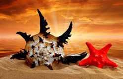 Conch shell with starfish Stock Photo