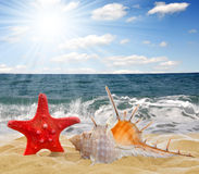 Conch shell with starfish. On beach stock images