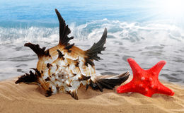 Conch shell with starfish. On beach Stock Photos