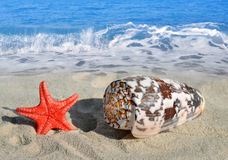 Conch shell with starfish Stock Images