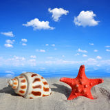 Conch shell with starfish Stock Image