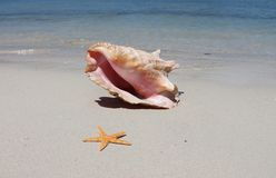 Conch shell and starfish on the beach. With blue waves Stock Photography