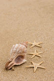 Conch shell and starfish at beach Royalty Free Stock Photography