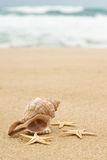 Conch shell and starfish on the beach Royalty Free Stock Photography