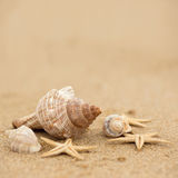 Conch shell and starfish on the beach. Close up Royalty Free Stock Images