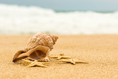 Conch shell and starfish on the beach. Close up stock image