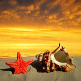 Conch shell with starfish Royalty Free Stock Photos