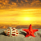 Conch shell with starfish Royalty Free Stock Photo