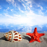 Conch shell with starfish Stock Photos