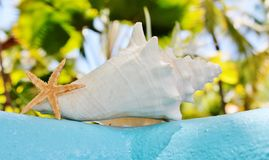 Conch shell starfish on wall with aqua Royalty Free Stock Photo