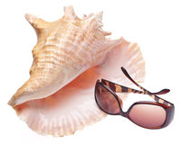 Conch Shell and Sunglasses Royalty Free Stock Image