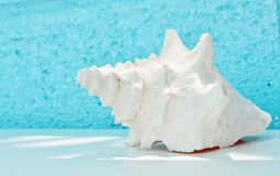 Conch shell on table with aqua Royalty Free Stock Photo