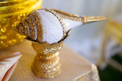 Conch shell for Thai wedding ceremony. Thailand wedding accessory Royalty Free Stock Photo