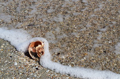 Conch shell and waves Royalty Free Stock Photography