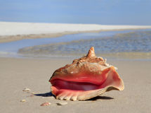 Conch Shell  on White Sand Beach Stock Photos
