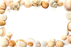 Conch shells Royalty Free Stock Images
