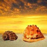 Conch shells on beach Stock Photos