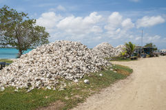 Conch shells at Lac Cai, Bonaire Stock Images
