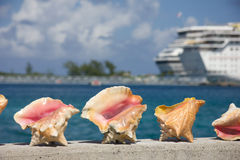 Conch shells. A row of conch shells in the Bahamas for sale to tourists with a cruise ship in the background in the harbor Royalty Free Stock Images