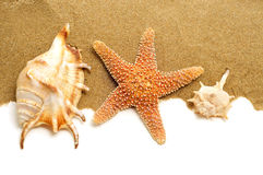 Conch shells and starfish on the sand. Some conch shells and a starfish on the sand, on a white background with a blank space to write your text Royalty Free Stock Photo