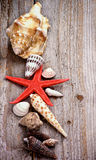 Conch Shells and Starfish Stock Photo