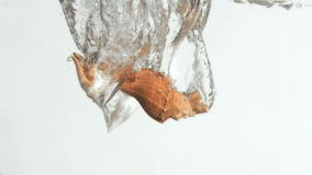 Conch shells in a super slow motion falling in the water. Against a white background stock video footage
