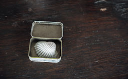 Conch in the small box on the old brown wooden table stock photography