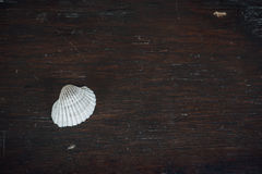 Conch and the small boxes on the old brown wooden table royalty free stock image