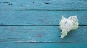 Conch on table. Conch on blue wooden table Royalty Free Stock Images