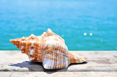 Conch on a wooden pier Royalty Free Stock Images