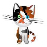Concha británica del gato Fotografía de archivo