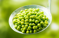 Concha completamente de ervilhas verdes frescas cozinhadas foto de stock royalty free