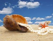 Concha de berberecho con un collar de la perla Fotos de archivo libres de regalías