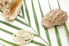 Concha de berberecho dos con las perlas blancas Imagenes de archivo
