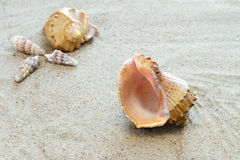 Concha de berberecho en la arena Fotos de archivo libres de regalías