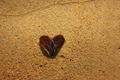 Concha de berberecho en la arena Imagen de archivo