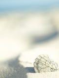 Concha de berberecho vieja en el mar que chirría fotos de archivo libres de regalías