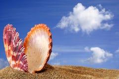 Concha de peregrino de la playa Imagenes de archivo